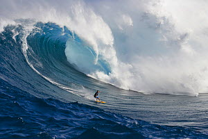 A tow-in surfer drops to the curl of Hawaii's big surf at Peahi (Jaws) off Maui, Hawaii. January 2004.  -  David Fleetham
