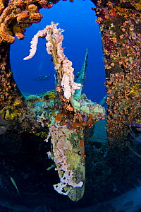 Diver swimming behind coral growing on the prop of the wrecked ^Hilma Hooker,^ a 236 foot long cargo vessel that sunk in 1984 off Bonaire, Caribbean. June 2008. Model released  -  David Fleetham