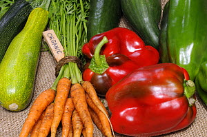 Freshly harvested home grown organic vegetables with 'organic' label, carrots, peppers, courgettes, cucumbers, UK  -  Gary K. Smith