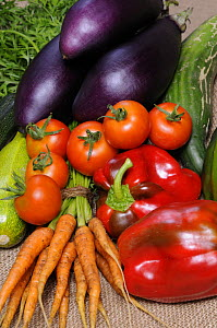 Freshly harvested home grown organic vegetables, carrots, peppers, courgettes, cucumbers, aubergine, tomatoes, UK - Gary K. Smith