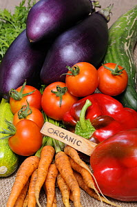 Freshly harvested home grown organic vegetables with 'organic' label, carrots, peppers, courgettes, cucumbers, aubergine, UK  -  Gary K. Smith
