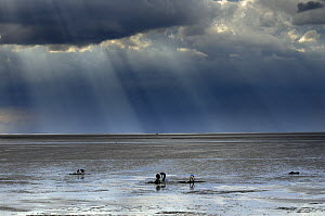 The Wash, Norfolk, beach landscape with storm clouds and bait diggers, UK, August  -  Gary K. Smith