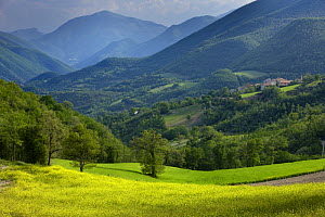 Spring in the Valnerina near Meggiano, Umbria, Italy  -  David Noton