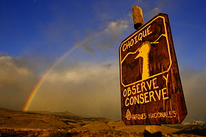 """Rainbow over the patagonian steppe and a sign """"Watch and preserve"""" for the protection of Darwin's Rhea or Choique (Pterocnemis pennata) near El Chalten, Los Glaciares National Park, Patagonia, Argenti...  -  Oriol Alamany"""