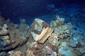 A suitcase lying on the coral reef, a reminder of one of the worse shipping accidents to have occurred in the northern Red Sea, the sinking of the Salem Express on the night of the 15th December 1991.  -  Francis Abbott