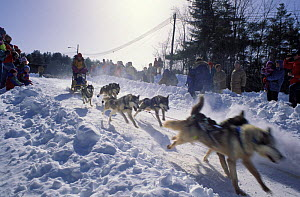 A sled dog team starting their run in the Sandwich Notch 50 sled dog race, Sandwich, New Hampshire, USA. - Jerry Monkman