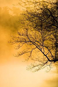 Low sun, mist and branches at dawn at Walden Pond State Reservation, Concord, Massachussets, USA  -  Jerry Monkman