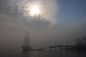 Early morning fog in Bar Harbor obscures the view of The Margaret Todd, a four-masted schooner,  Maine, USA  -  Jerry Monkman