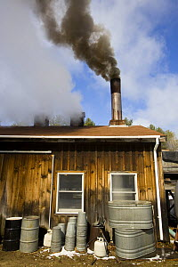 Wood smoke and steam pours out of the chimneys of a sugar house in Barrington, New Hampshire, USA. The Sugar Shack, manufacture of maple syrup.  -  Jerry Monkman