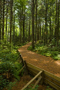 A wheelchair accesible trail in Craftsbury, Vermont, USA  -  Jerry Monkman
