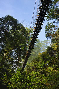 Canopy walkway in lowland dipterocarp rainforest, Danum Valley, Sabah, Borneo, September 2008  -  Tony Heald