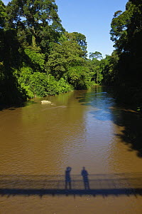 Danum River flowing through lowland dipterocarp rainforest with shadow of people on walkway crossing river, Danum Valley, Sabah, Borneo, September 2008  -  Tony Heald