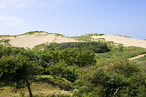 Large mobile dune system on north west coast of England, Formby, Merseyside, UK  -  Jason Smalley