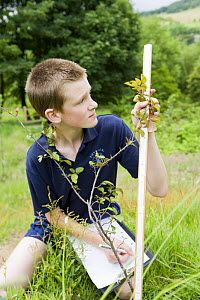 School boy measuring how much a young sapling tree has grown, UK  -  Jason Smalley