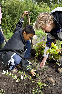 Teacher helping a school boy to plant a shrub, UK - Jason Smalley