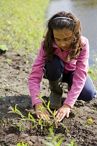 Young girl planting a plant in a garden, UK  -  Jason Smalley
