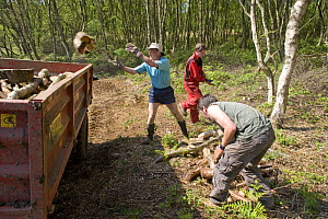 Conservation volunteers working in woodland management, Heysham Moss Reserve, Lancashire, UK  -  Jason Smalley