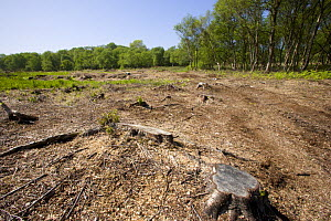 Heysham Moss nature reserve after woodland clearance, Lancashire, UK  -  Jason Smalley