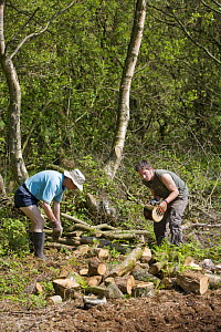 Conservation volunteers working on woodland management, Heysham Moss Reserve, Lancashire, UK - Jason Smalley