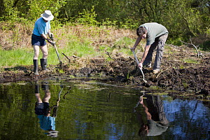 Conservation volunteers damming up an acid pool on a raised bog in woodland, Heysham Moss reserve, Lancashire, UK - Jason Smalley