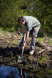 Conservation volunteer damming up an acid pool on a raised bog in woodland, Heysham Moss reserve, Lancashire, UK - Jason Smalley