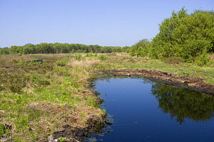 Acid pool on raised bog after conservation work has been completed, Heysham Moss Reserve, Lancashire, UK  -  Jason Smalley