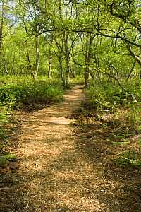 Woodchip path through a woodland, Heysham Moss Reserve, Lancashire, UK - Jason Smalley