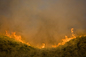 Moorland fire, Anglezarke, Lancashire, UK  -  Jason Smalley