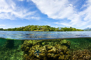 Split level view of shallow coral reef system with Blue starfish and mangroves in the background. McLaren (Kofulu) Harbour, Tufi, Papua New Guinea - Michele Westmorland