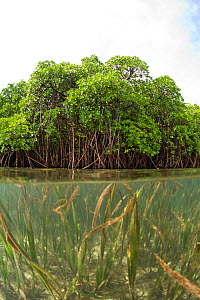 Split level view of shallow seagrass system and mangroves in background. McLaren (Kofulu) Harbour, Tufi, Papua New Guinea - Michele Westmorland