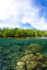 Split level view of shallow coral reef system and mangroves in the background. McLaren (Kofulu) Harbour, Tufi, Papua New Guinea - Michele Westmorland