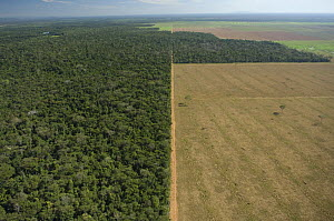 Aerial view of cattle pasture land created from tropical rainforest, Western Mato Grosso State, Western Brazil.  -  Luiz Claudio Marigo