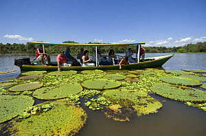 Tourists viewing the Giant Water Lilies (Victoria regia) during tour to the meeting of the waters and the Amazon Rainforest, near Manaus city, Amazonas State, Northern Brazil.  -  Luiz Claudio Marigo