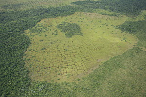Aerial view of vestiges on the land of ancient agricultural works of primitive people, Beni floodplain, Beni Department, Bolivia  -  Luiz Claudio Marigo