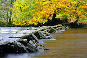 Tarr Steps Clapper Bridge and the River Barle, autumn, nr Withypool, Exmoor National Park, Somerset, UK. October 2008.  -  Ross Hoddinott