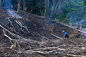Forest felling on the edge of Kinabalu NP, Sabah, Borneo, Malaysia - Nick Garbutt