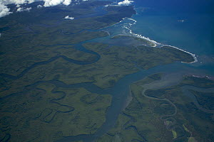 Aerial view of mangrove forest and wetlands in the delta of the Rio Sierpe, Puntarenas, Costa Rica. - Tim Laman