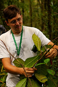 Botanist, George Weiblen, examining a (Ficus sp) plant in the rainforest. Mu Village vicinity, Chimbu Province, Papua New Guinea. 2005  -  Tim Laman