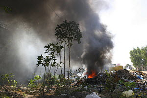 Cassava growing next to rubbish tip on fire, Kololi, The Gambia, 2008 - Tom Gilks