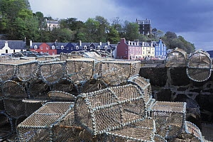 Tobermory harbour with lobster pots in the foreground, Isle of Mull, Inner Hebrides, Scotland, UK  -  Jouan & Rius
