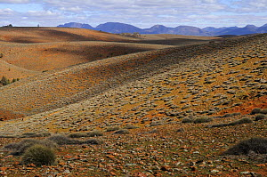 Slopes covered by spinifex grass, Flinders Ranges National Park, South Australia, Australia - Jouan & Rius