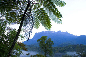 Tree fern and rainforest with Mt Kinabalu in background, Mount Kinabalu NP, Sabah, Borneo, Malaysia  2007  -  Juan Carlos Munoz