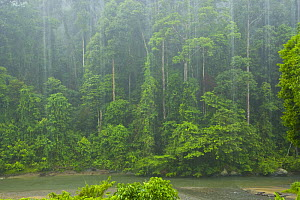Tropical rainstorm in tropical rainforest, Danum Valley Forest Reserve, Sabah, Borneo, Malaysia 2007  -  Juan Carlos Munoz