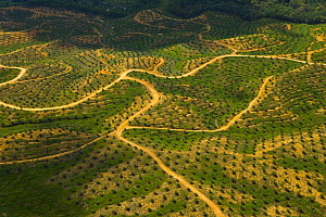 Aerial view of palm oil plantation on deforested land, Sabah, Borneo, Malaysia~ 2007 - Juan Carlos Munoz