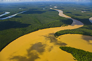 Aerial view of lowland rainforest and Kinabatangan River and tributaries coloured with mineral deposits, Sabah, Malaysia . 2007  -  Juan Carlos Munoz