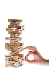 Why biodiversity matters. Person pulling labelled wooden block from game of Jenga, all blocks above will come tumbling down, Scotland, UK, 2007  -  Niall Benvie
