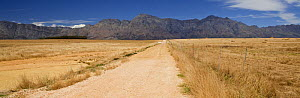 Upaved road and mountains, South Africa. December 2008.  -  Onne van der Wal