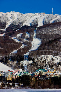 Snow covered trees line the slopes of Mount Tremblant. Quebec, Canada, 2008. - Onne van der Wal