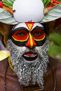 Villager in traditional costume at Payakona Village singsing ceremony. Mount Hagen vicinity in the Western Highlands Province, Papua New Guinea. September 2004  -  Tim Laman
