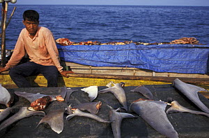 Fishermen drying shark fins, tropical Indian Ocean. Shark fin soup is popular in Asia. Worldwide shark populations are quickly being depleted. Many species are now endangered.  NOT FOR SALE IN THE US...  -  Brandon Cole